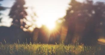 Sluneční louka